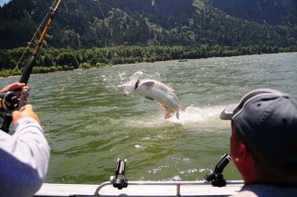Columbia river fishing in the summer or wa fishing for River fishing tips