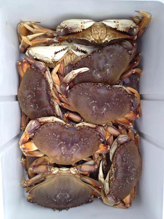 Summer crab season washington 2015 autos post for Crab fishing oregon